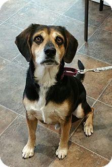 Beagle Mix Dog for adoption in Lisbon, Ohio - Bubba