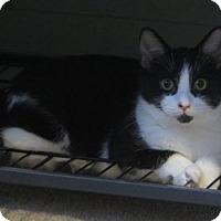 Adopt A Pet :: .Hadrian - Ellicott City, MD