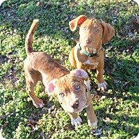Adopt A Pet :: Walt & Disney - Marietta, GA