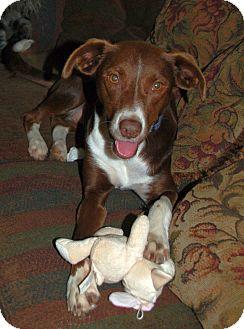 Retriever (Unknown Type)/Labrador Retriever Mix Dog for adoption in Homewood, Alabama - Jasmine