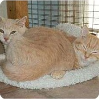 Adopt A Pet :: Wooley Wooster - McDonough, GA