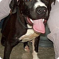 Adopt A Pet :: GATOR - Glastonbury, CT