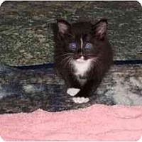Adopt A Pet :: Crabman - Secaucus, NJ