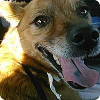 Adopt A Pet :: Kylie URGENT - San Diego, CA