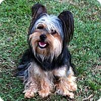 Adopt A Pet :: Aubrey - Knoxville, TN