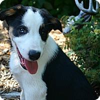Adopt A Pet :: Trevor - Bellevue, NE