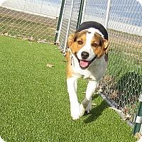 Adopt A Pet :: Rodney - Meridian, ID