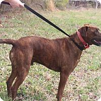 Adopt A Pet :: Roscoe - Millersville, MD