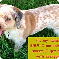Adopt A Pet :: BRU - Boca Raton, FL