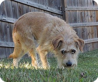 terrier unknown type medium mix dog for adoption in