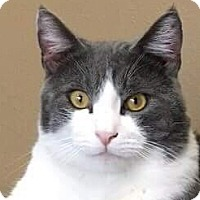 Adopt A Pet :: Kacy - Irvine, CA