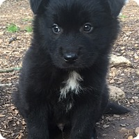 Adopt A Pet :: Lancalot - Smyrna, GA