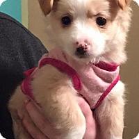 Adopt A Pet :: Ivy - Willingboro, NJ