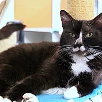 Adopt A Pet :: Pierre - Sarasota, FL