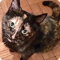 Adopt A Pet :: Tortie Stunner, Lucy Liu - Brooklyn, NY