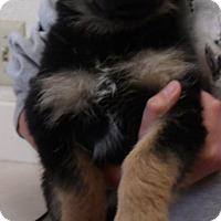 Adopt A Pet :: ISABELLE - Corona, CA