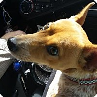 Adopt A Pet :: Markey - Bradenton, FL