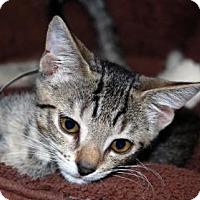 Adopt A Pet :: Honey Lemon - Bradenton, FL