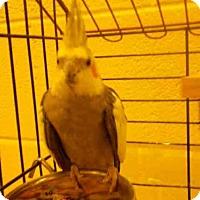 Adopt A Pet :: *DEDE - Upper Marlboro, MD