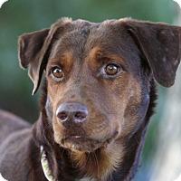 Adopt A Pet :: SOLEIL - Ile-Perrot, QC