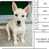 Adopt A Pet :: Molly - Hanover, ON