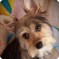 Adopt A Pet :: Minnie - Yuba City, CA
