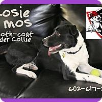 Border Collie Dog for adoption in Cave Creek, Arizona - ROSIE