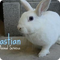 Adopt A Pet :: Sebastian - Hamilton, ON