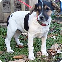 Adopt A Pet :: Dasher - Newburgh, NY
