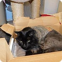 Adopt A Pet :: Magic - Warminster, PA