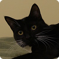 Adopt A Pet :: Butters - Monroe, MI