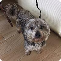 Adopt A Pet :: Roosevelt - Redondo Beach, CA