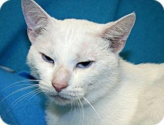 Adopt A Sphynx Cat Kentucky