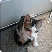 Adopt A Pet :: Robin - Davis, CA