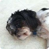 Adopt A Pet :: Biggio in Houston - Houston, TX