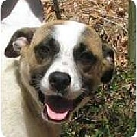 Adopt A Pet :: Brayden - Thomaston, GA