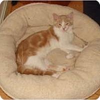 Adopt A Pet :: Sonny - Spotsylvania, VA