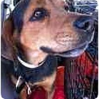 Adopt A Pet :: Zoey Blue - Phoenix, AZ
