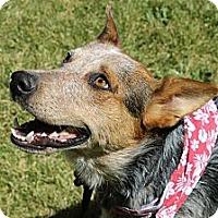 Adopt A Pet :: Ky - Phoenix, AZ