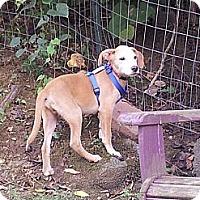 Adopt A Pet :: Nestle - Richmond, VA