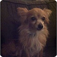 Adopt A Pet :: Selin - Toronto/Etobicoke/GTA, ON