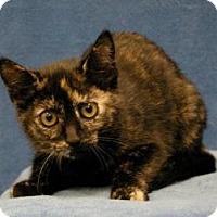 Adopt A Pet :: Katie - Sacramento, CA
