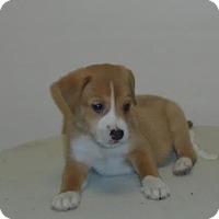 Adopt A Pet :: Less - Gary, IN