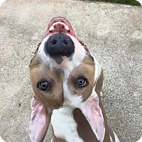 Adopt A Pet :: Rosemary - Alpharetta, GA