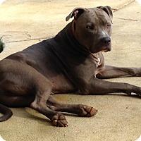 Adopt A Pet :: Chief - New Orleans, LA
