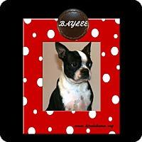 Adopt A Pet :: Baylee - Alabaster, AL