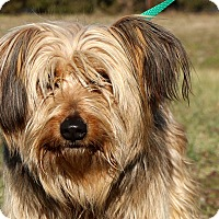 Adopt A Pet :: Wesley~adopted! - Glastonbury, CT