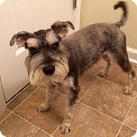 Adopt A Pet :: Gus - Laurel, MD