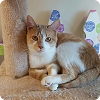 Adopt A Pet :: Sneezy - Maryville, TN
