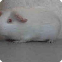 Adopt A Pet :: *Urgent* Daisy - Fullerton, CA